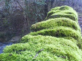 Moss Photo Wall RSR