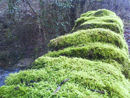 Moss Wall Photo RSR