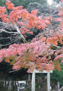 Shinto shrine under red leaves. Photo: © Hazel Waghorn