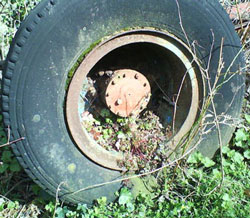 Old wheel with plant growing.