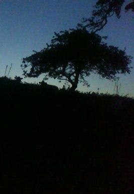 Night view in Devon countryside.