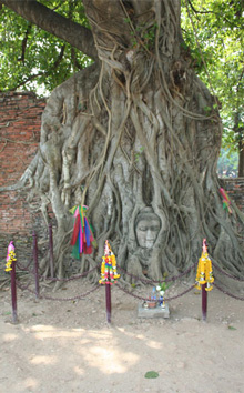 Ja-tree with Buddha Photo © Janet Novak