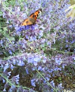 Butterfly on Blue Flowers.