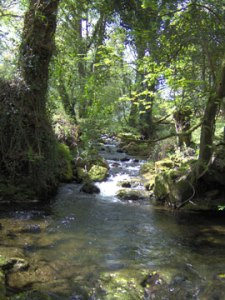Bala Brook, Devon