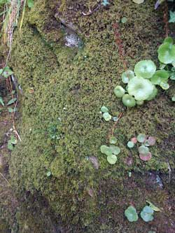 Photo of a moss wall in Devon, England