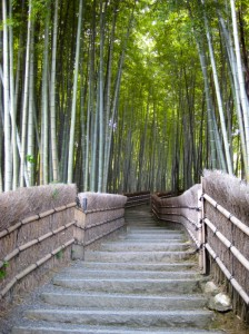 Bamboo pathway at Adashino Nenbutsu-ji. Photo © @KyotoDailyPhoto