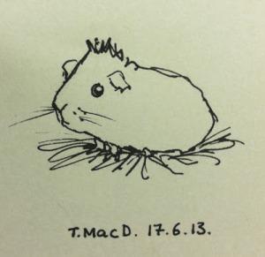 Guina Pig Artwork @TessaMacDermot