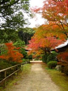Wandering through Daigo-ji's woodland shortly before rain. The temple was founded by Shobo in 874. Photo © @KyotoDailyPhoto