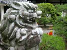 Kenkun-jinja's (建勲神社) Komainu (狛犬). One superstition says the maw of the open-mouthed (阿形 'A-gyo') lion-dog will close in the presence of a liar. In a test of honesty hands can thus be placed in the fearful statue's mouth. Photo © @KyotoDailyPhoto