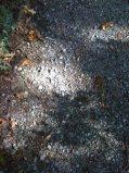 Light on stone path.