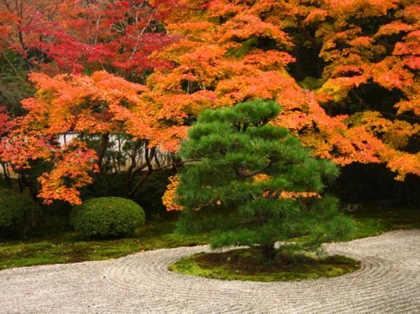 The little pine tree. Photo © @KyotoDailyPhoto
