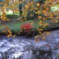 Devon stream