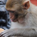 Monkey with biscuit, Mustang. Photo © Lisa Daix