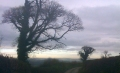 Trees over Totnes. © RSR