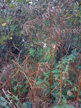Wild hedgerow