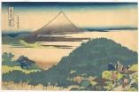 Cushion Pine at Aoyama