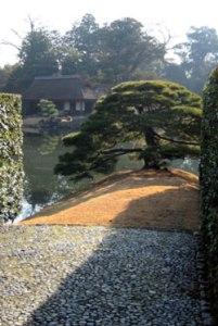 Katsura Rikyu (桂離宮)-The barest glimpse of Shokin-tei (松琴亭 'Pine Zither Tea-house') beyond the Sumiyoshi-no-Matsu (住吉の松) © @KyotoDailyPhoto