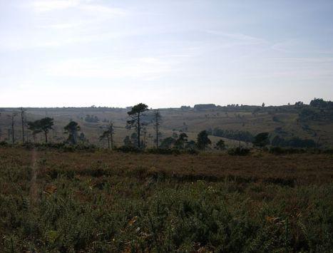 Ashdown Forest View Near Greenwood Gate Clump © Wikipedia