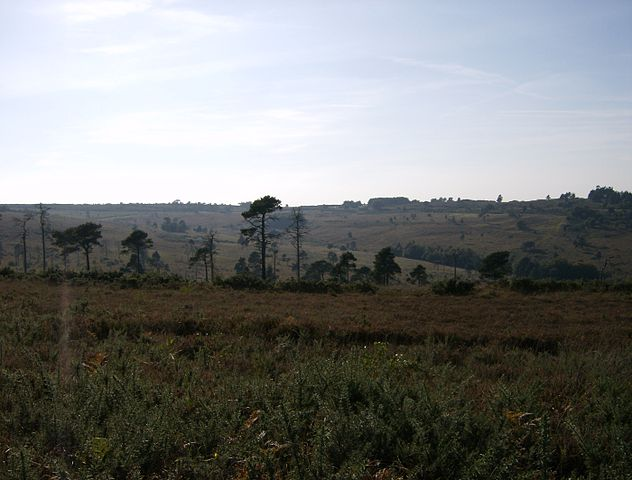 Ashdown Forest View Near Greenwood Gate Clump © Wikipedia