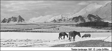 Horses_in_tibet