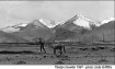 Tibetan Horseman © Linda Griffiths