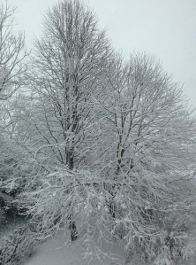 Snow on Trees. © BPG