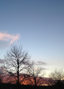 Winter sky and trees towards Totnes © RSR