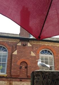 Seagull in Totnes.